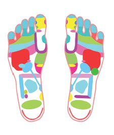 Reflexology Zones