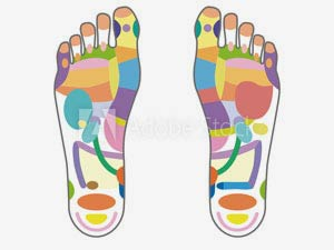 Kenkoh nodule placement is based on Reflexology theory